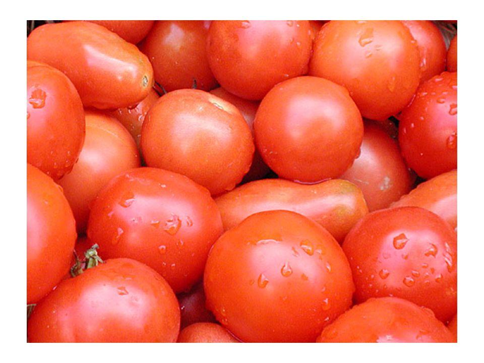 Dann verkauft sie die Tomaten von Tür zu Tür und innerhalb von 2 Stunden verdoppelt sie ihr Kapital.