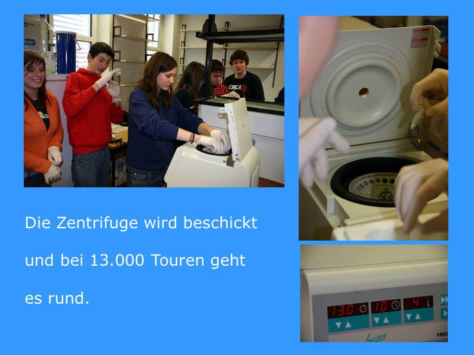 Die Zentrifuge wird beschickt und bei 13.000 Touren geht es rund.