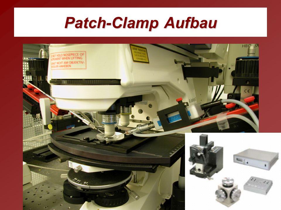Patch-Clamp Aufbau