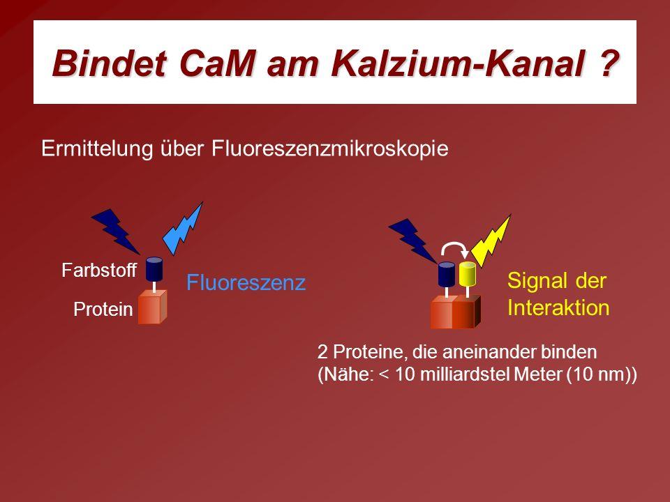 Ermittelung über Fluoreszenzmikroskopie Protein Farbstoff Fluoreszenz 2 Proteine, die aneinander binden (Nähe: < 10 milliardstel Meter (10 nm)) Signal