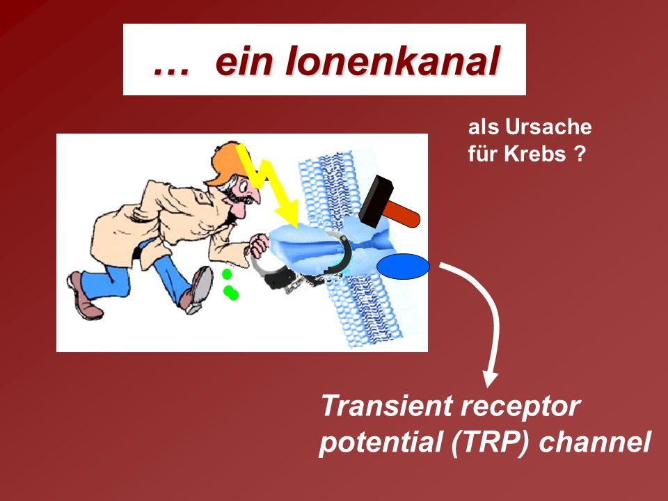 Was ist ein TRP - Protein? transient … vorübergehend ? nur welche Ionen … Na + Ca 2+ Mg 2+ …