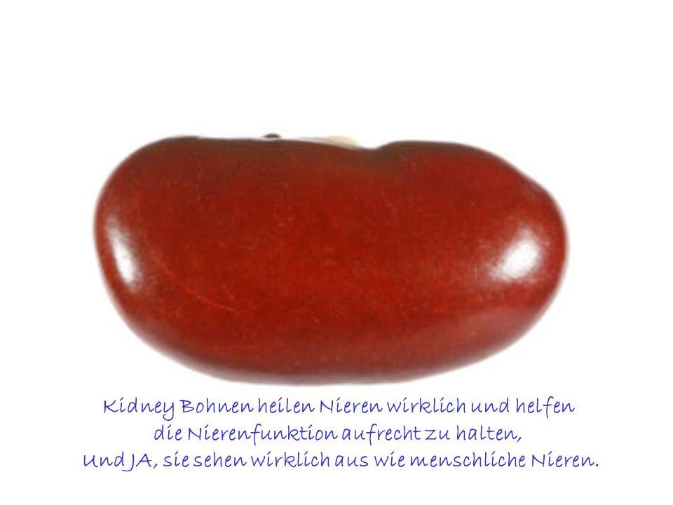 Kidney Bohnen heilen Nieren wirklich und helfen die Nierenfunktion aufrecht zu halten, Und JA, sie sehen wirklich aus wie menschliche Nieren.