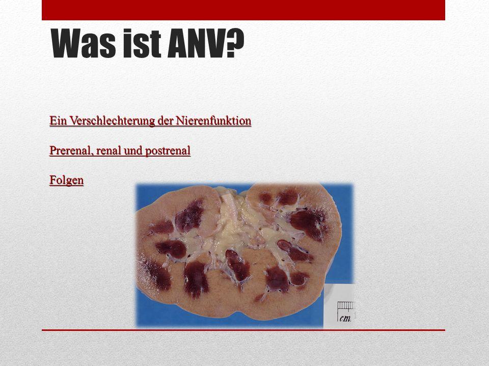 Was ist ANV? Ein Verschlechterung der Nierenfunktion Prerenal, renal und postrenal Folgen