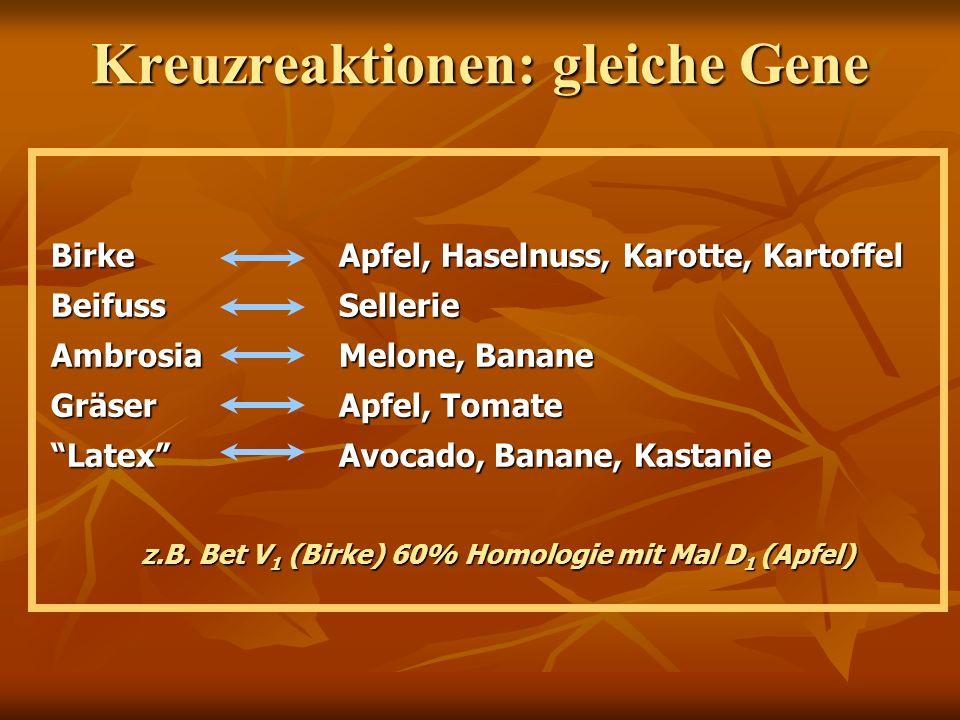 z.B. Bet V 1 (Birke) 60% Homologie mit Mal D 1 (Apfel) BirkeApfel, Haselnuss, Karotte, Kartoffel BeifussSellerie AmbrosiaMelone, Banane GräserApfel, T