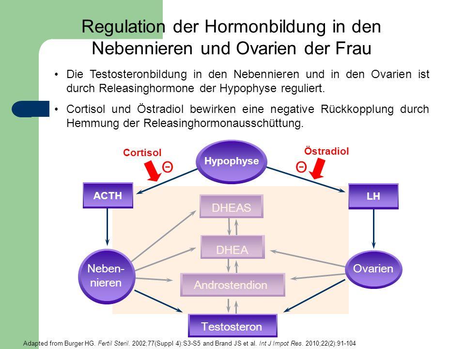 Regulation der Hormonbildung in den Nebennieren und Ovarien der Frau DHEAS DHEA Androstendion Testosteron Cortisol Östradiol ΘΘ LHACTH Neben- nieren O