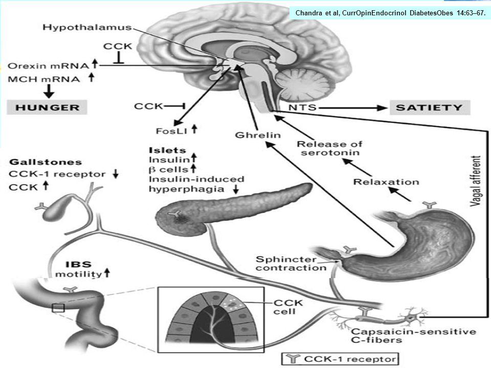 Darm & Diabetes Berneis 9. Juni 2011 Universitätsspital Zürich Ghrelin Cholezystokinin Als erstes Hormon hinsichtlich Nahrungsregulation erforscht Aus