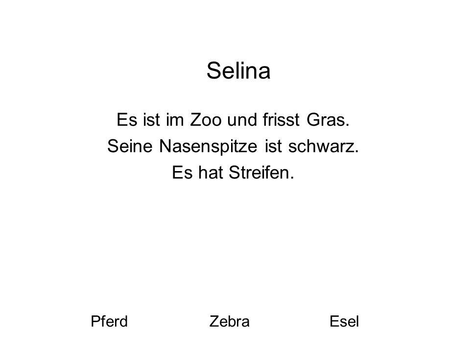 Selina Es ist im Zoo und frisst Gras. Seine Nasenspitze ist schwarz. Es hat Streifen. PferdZebraEsel