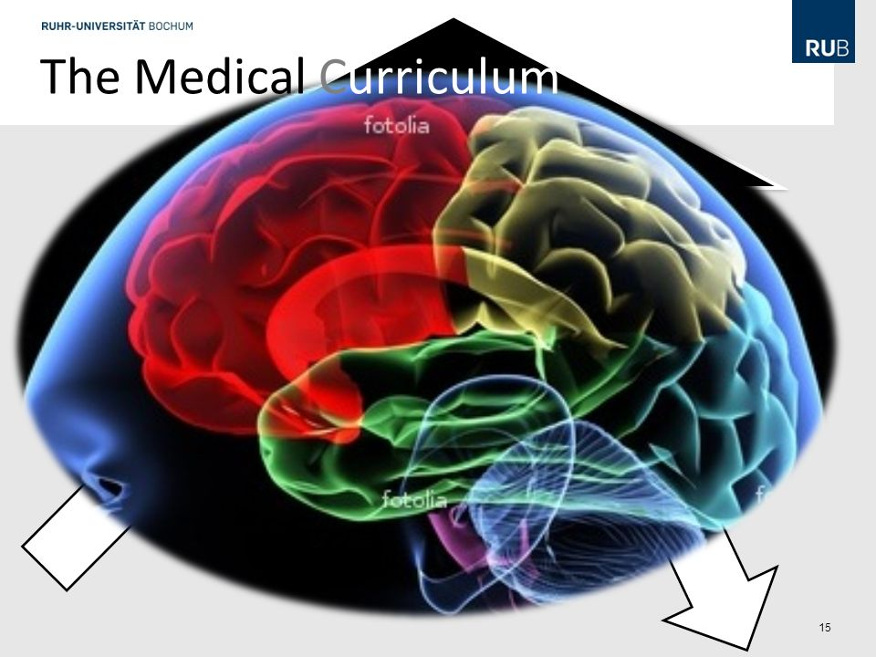 15 2nd State Examination The Medical Curriculum