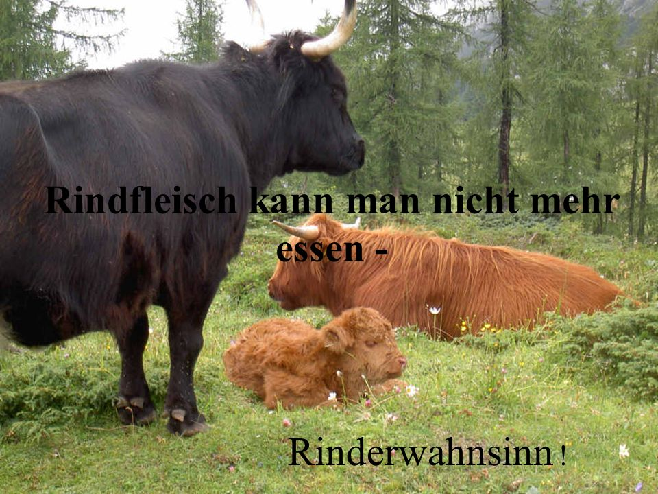 Rindfleisch kann man nicht mehr essen - Rinderwahnsinn !