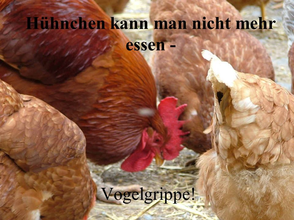 Hühnchen kann man nicht mehr essen - Vogelgrippe!