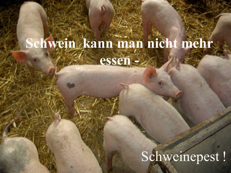 Schwein kann man nicht mehr essen - Schweinepest !