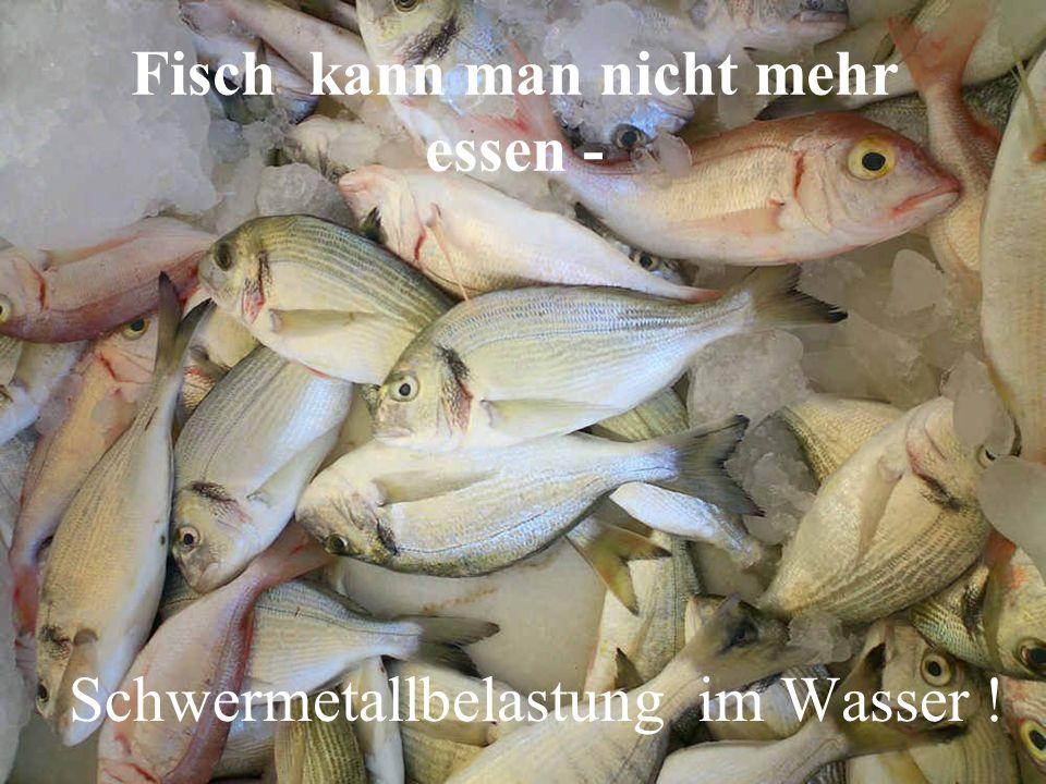 Fisch kann man nicht mehr essen - Schwermetallbelastung im Wasser !