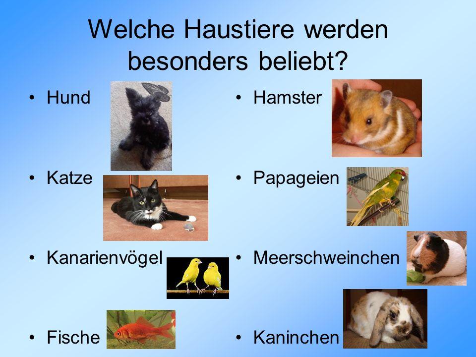 Welche Haustiere werden besonders beliebt? Hund Katze Kanarienvögel Fische Hamster Papageien Meerschweinchen Kaninchen