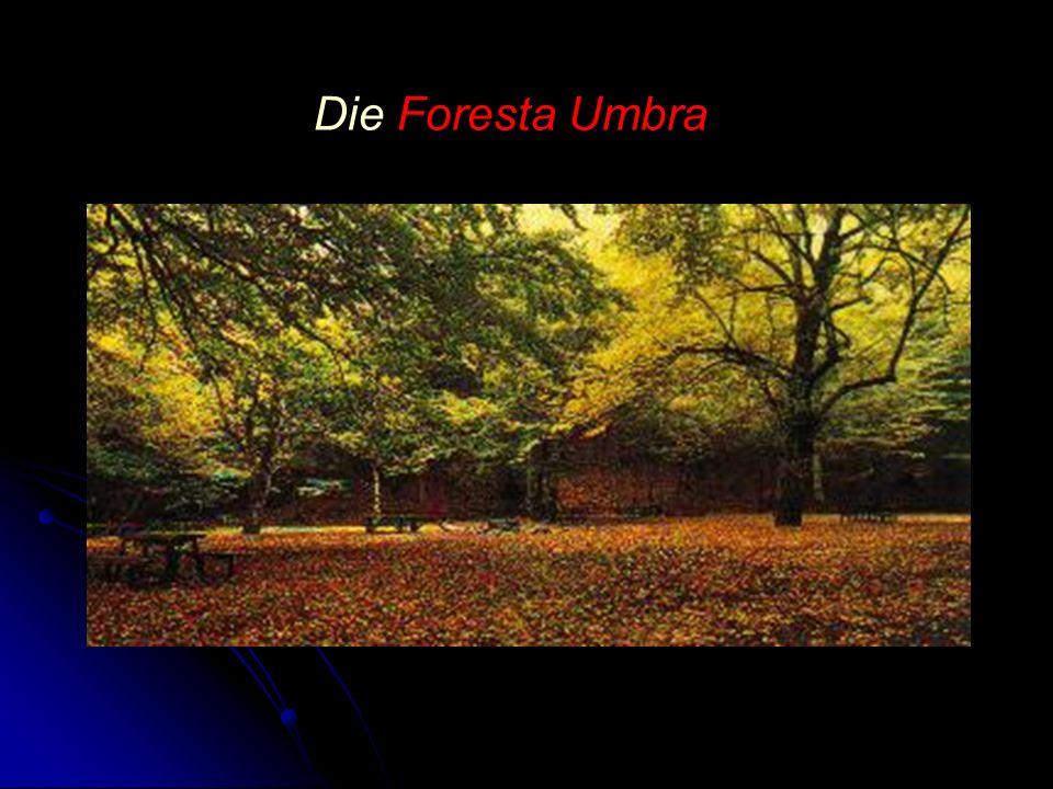 Die Foresta Umbra