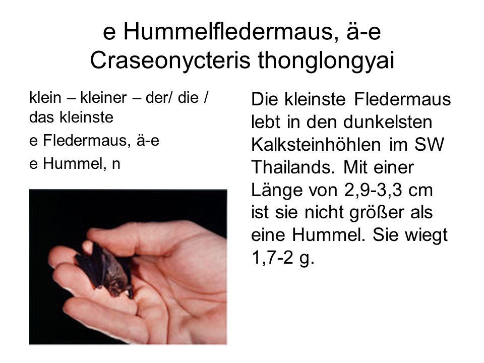 e Hummelfledermaus, ä-e Craseonycteris thonglongyai klein – kleiner – der/ die / das kleinste e Fledermaus, ä-e e Hummel, n Die kleinste Fledermaus le