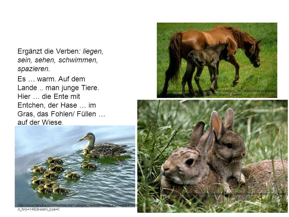 Ergänzt die Verben: liegen, sein, sehen, schwimmen, spazieren. Es … warm. Auf dem Lande.. man junge Tiere. Hier … die Ente mit Entchen, der Hase … im