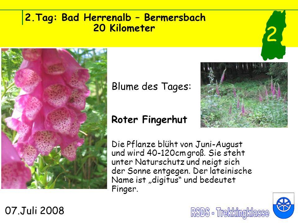 2.Tag: Bad Herrenalb – Bermersbach 20 Kilometer 07.Juli 2008 2 Blume des Tages: Roter Fingerhut Die Pflanze blüht von Juni-August und wird 40-120cm groß.