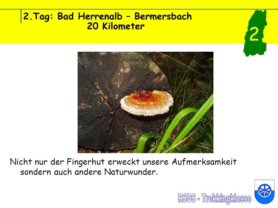 2.Tag: Bad Herrenalb – Bermersbach 20 Kilometer Nicht nur der Fingerhut erweckt unsere Aufmerksamkeit sondern auch andere Naturwunder.