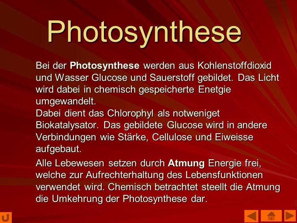 Photosynthese Bei der Photosynthese werden aus Kohlenstoffdioxid und Wasser Glucose und Sauerstoff gebildet. Das Licht wird dabei in chemisch gespeich