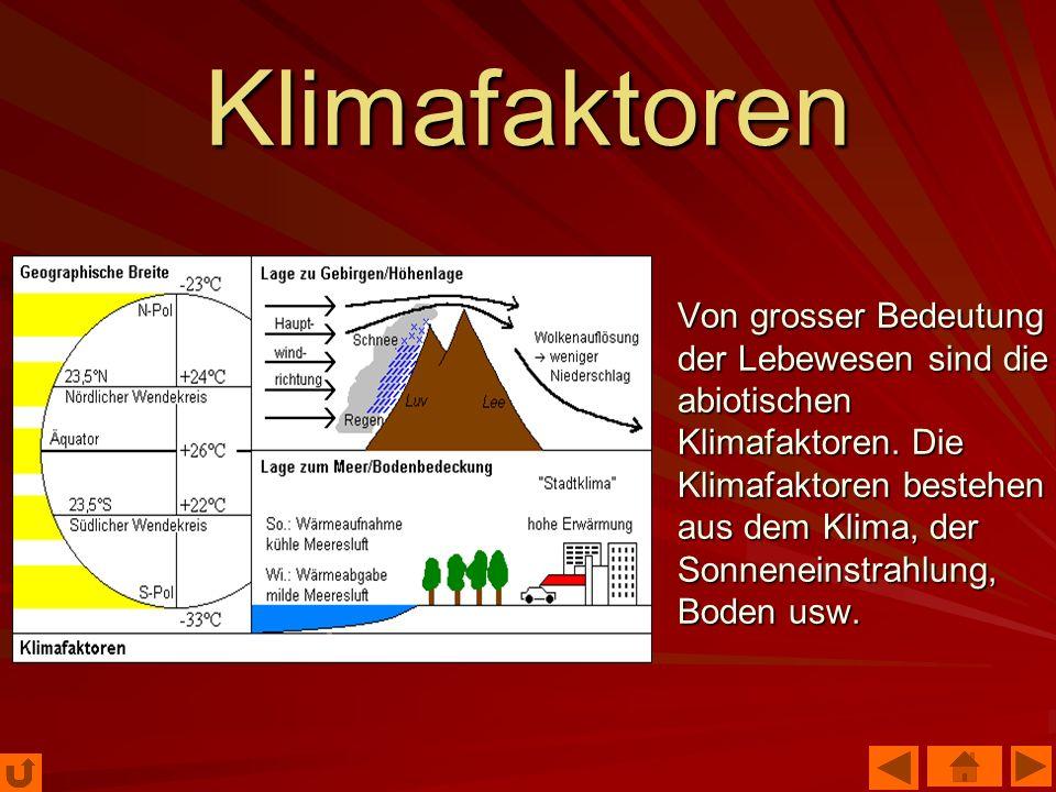 Klimafaktoren Von grosser Bedeutung der Lebewesen sind die abiotischen Klimafaktoren. Die Klimafaktoren bestehen aus dem Klima, der Sonneneinstrahlung