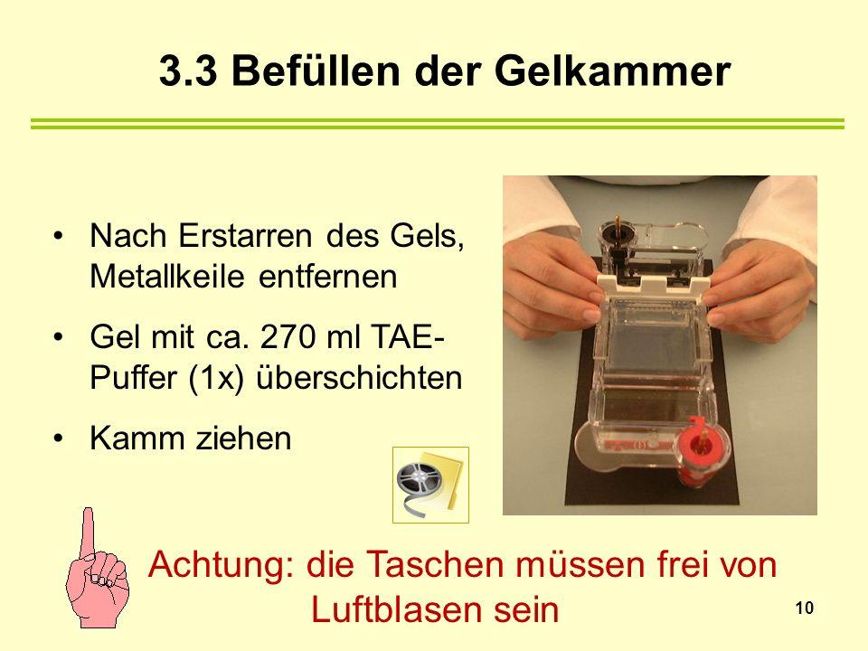 Nach Erstarren des Gels, Metallkeile entfernen Gel mit ca. 270 ml TAE- Puffer (1x) überschichten Kamm ziehen Achtung: die Taschen müssen frei von Luft