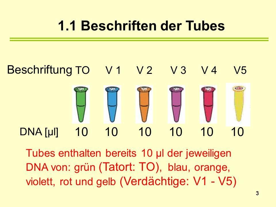 Tubes enthalten bereits 10 µl der jeweiligen DNA von: grün (Tatort: TO), blau, orange, violett, rot und gelb (Verdächtige: V1 - V5) 1.1 Beschriften der Tubes DNA [µl] 10 TO V 1 V 2 V 3 V 4 V5 10 3 Beschriftung