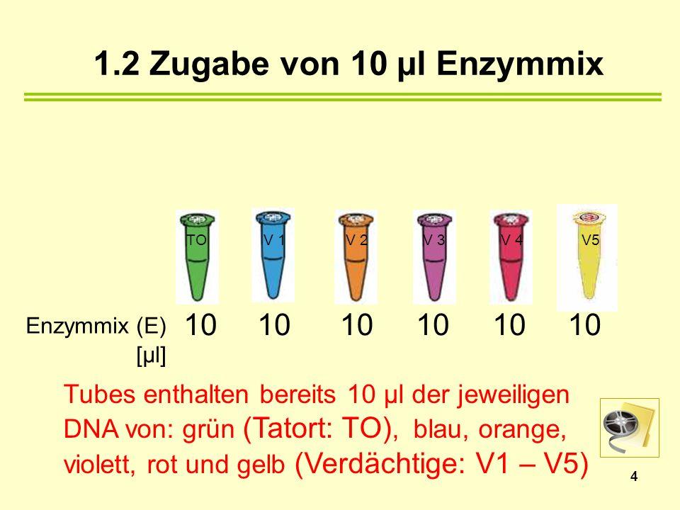 Tubes enthalten bereits 10 µl der jeweiligen DNA von: grün (Tatort: TO), blau, orange, violett, rot und gelb (Verdächtige: V1 – V5) 1.2 Zugabe von 10