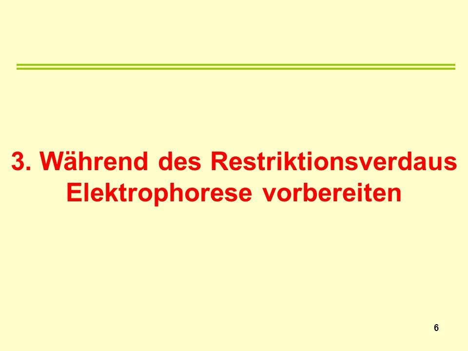 3. Während des Restriktionsverdaus Elektrophorese vorbereiten 6