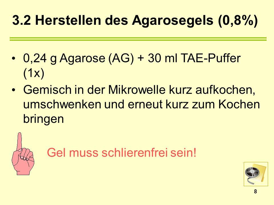 3.2 Herstellen des Agarosegels (0,8%) 0,24 g Agarose (AG) + 30 ml TAE-Puffer (1x) Gemisch in der Mikrowelle kurz aufkochen, umschwenken und erneut kurz zum Kochen bringen Gel muss schlierenfrei sein.