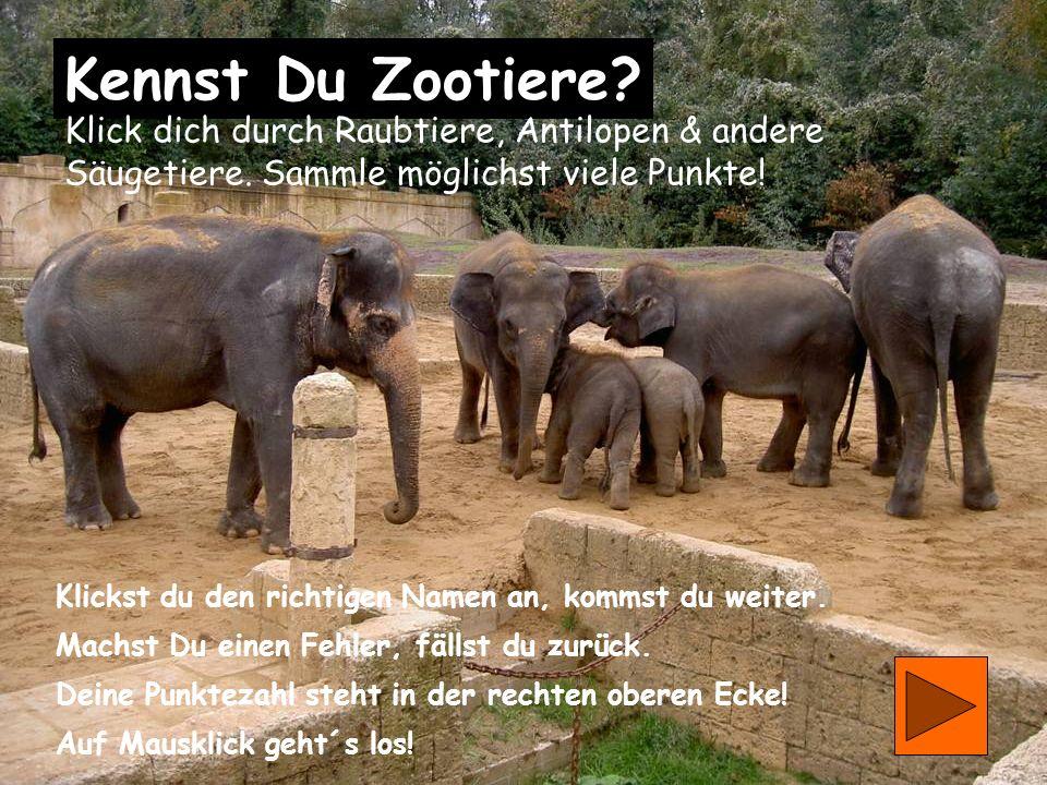 0 Kennst Du Zootiere.Klick dich durch Raubtiere, Antilopen & andere Säugetiere.