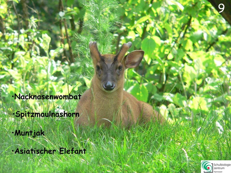 8 88 Wolf Dorcasgazelle Spitzmaulnashorn Löwe