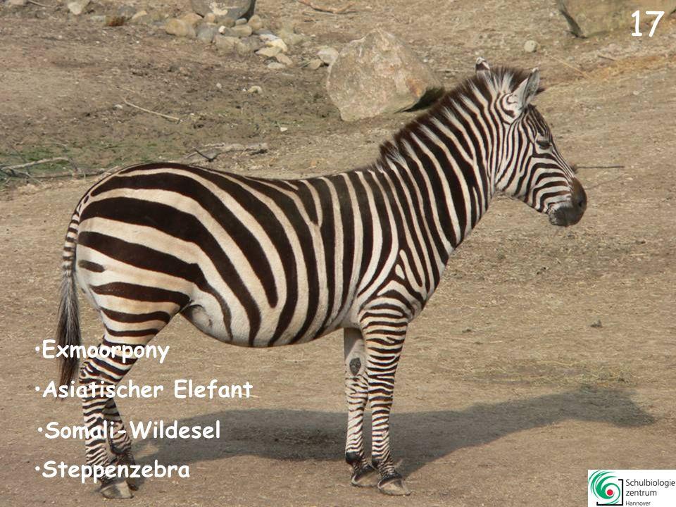 16 Elenantilope Sibirischer Tiger Exmoorpony Muntjak