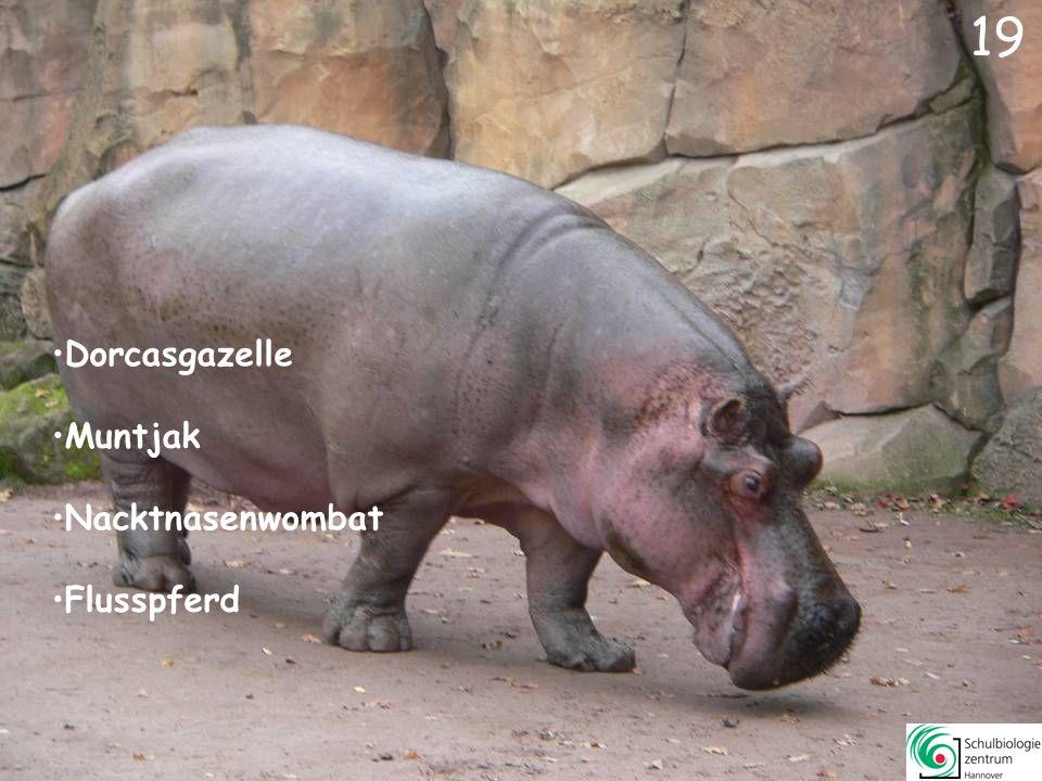 18 Blasentang 18 Schopfgibbon Schimpanse Erdmännchen Exmoorpony