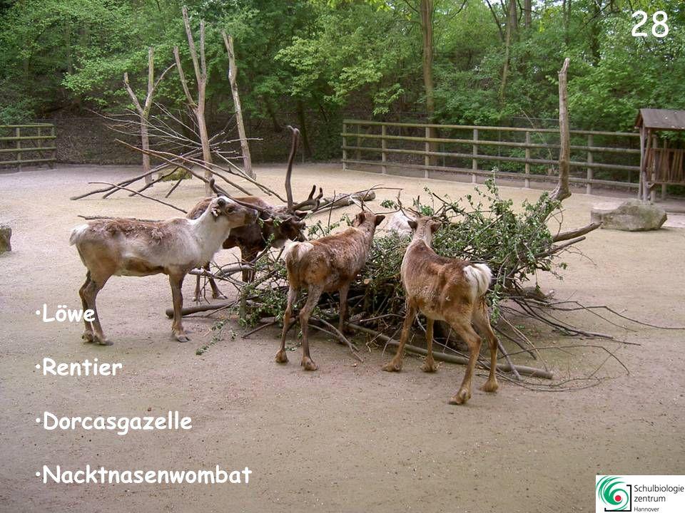 27 Hartmann-Bergzebra Steppenzebra Elenantilope Somali-Wildesel