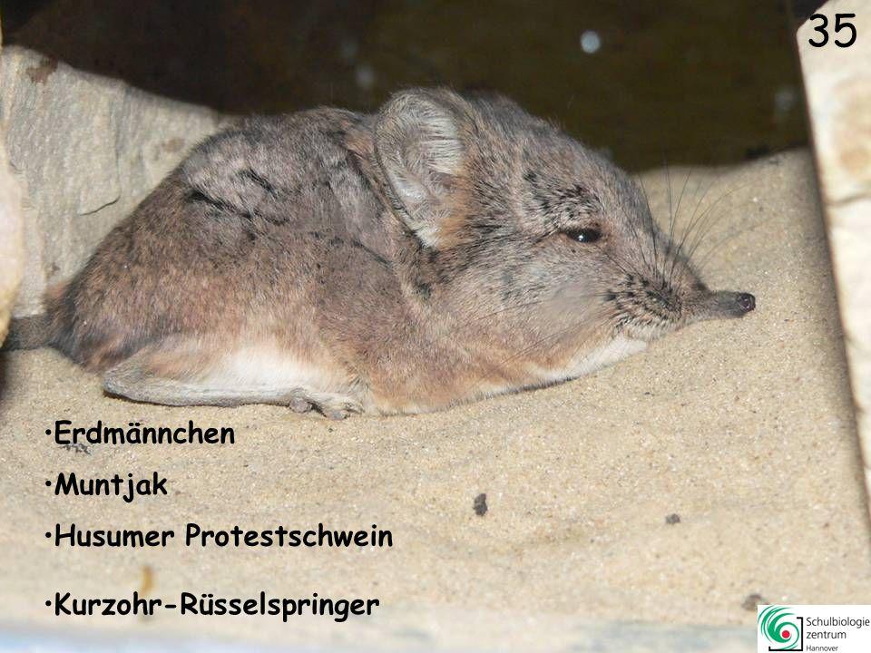 34 Stachelschwein Somali Wildesel Nacktnasenwombat Mara