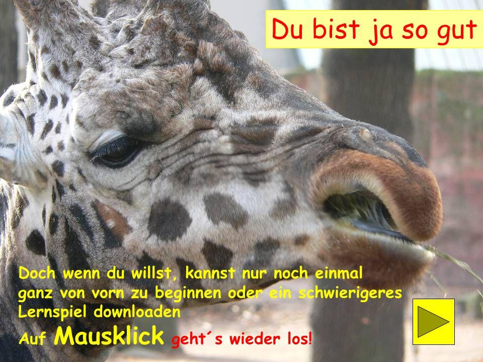 44 1Panthera leoLöwe26 Sus scrofa domesticaHusumer Protestschwein 2Pan troglodytesSchimpanse27Equus zebra Bergzebra 3Elephas maximusAsiatischer Elefan