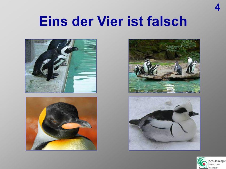 Lösungen 1: NilgauantilopeDorcasgazellePinselohrschweine falsch, da kein Hornträger WasserbockPinselohrschwein 2:PräriehundSeychellen-Riesenschildkröte Präriehund falsch, da kein Reptil KönigspythonDornschwanz 3: EmuStraußVicugna falsch, da kein Vogel SchmutzgeierVicugna 4: BrillenpinguinHumboldtpinguinZwergsäger falsch, da kein Pinguin KönigspinguinZwergsäger 5: MassaigiraffeNetzgiraffeOkapi falsch, da nur Waldgiraffe Rothschildgiraffe Okapi 6:MuntiakHirschziegenantilopeHirschziegenantilope falsch, da kein Hirsch MiluAxishirsch 7: KlippschlieferPferdeantilopeKlippschliefer falsch, da kein Hornträger RotduckerImpala