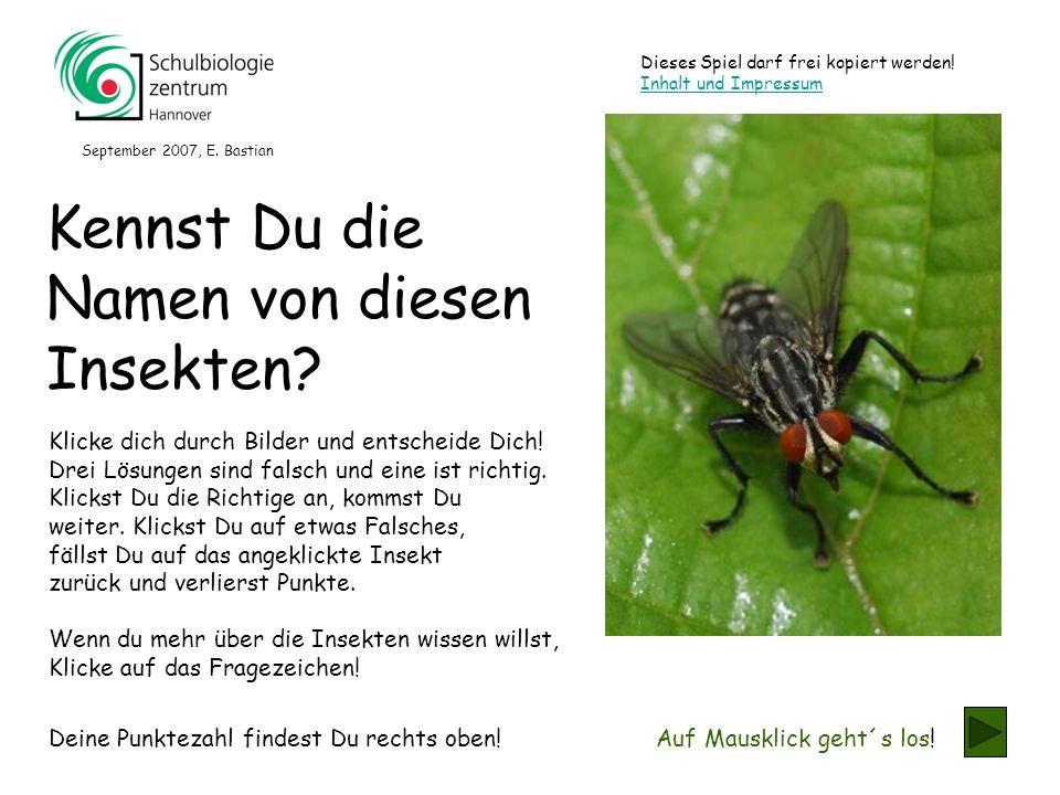 Diese Insekten besitzen riesige Facettenaugen, sodass sie ….