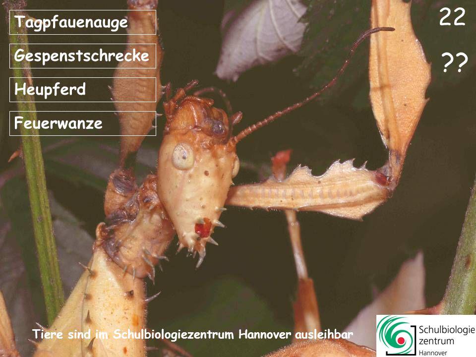 Bläuling Motte Ohrwurm Kein Insekt ?? 21