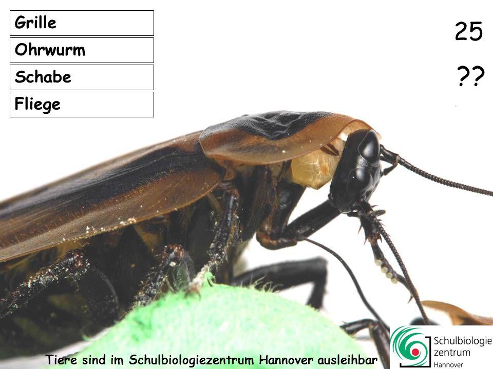 11 Fliege Schnake Grille Motte ?? 24