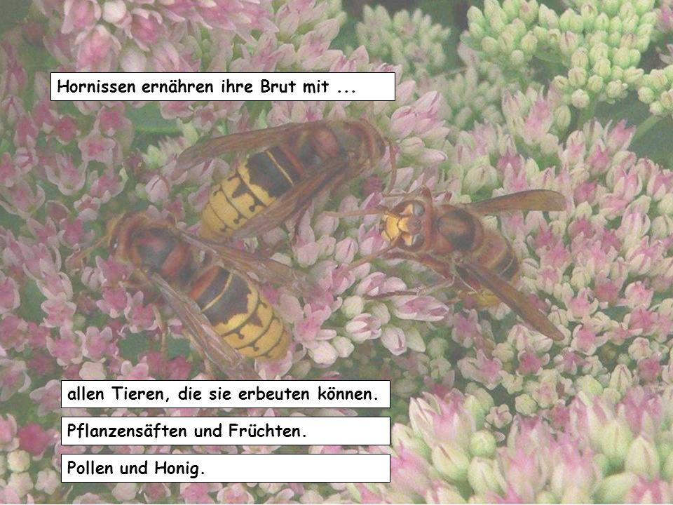 Die Tiere sind rot, weil… damit sie mit Marienkäfer verwechselt werden. sie als Warnfarbe so ihre Ungenießbarkeit anzeigen. sie sich in der Nähe von F