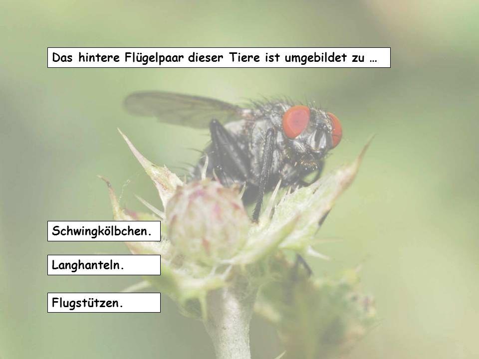 Dieses Insekt kann sich mit seinen langen Beinen auf der Wasseroberfläche fortbewegen, weil... es so leicht wie Luft ist. von der Oberflächenspannung