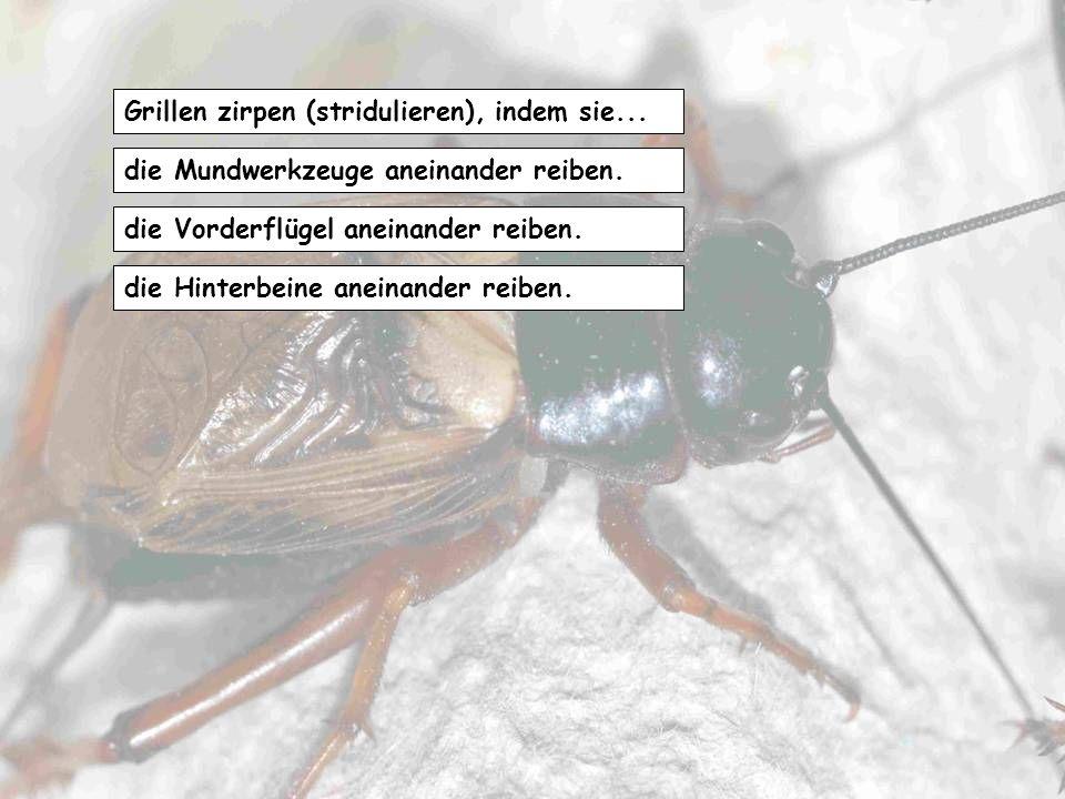 Libellen erreichen im Flug Geschwindigkeiten von maximal… 150 km/h 100 km/h 50 Km/h