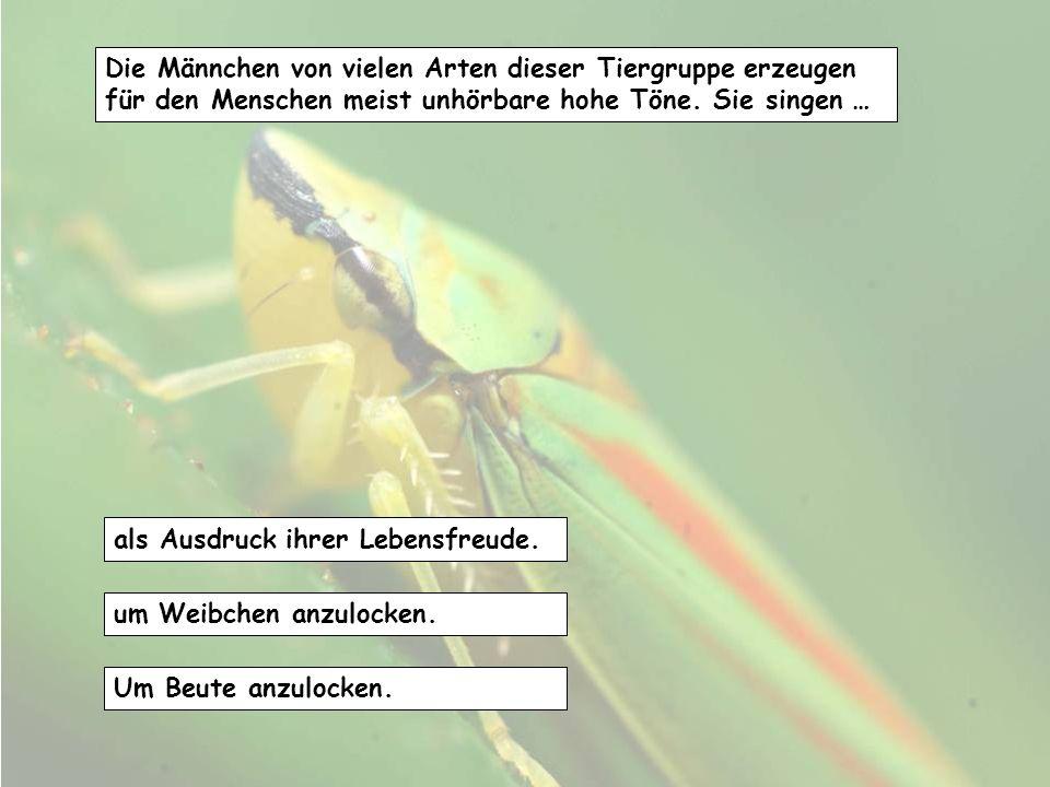 Geflügelte Ameisen, die es meist nur im Sommer gibt, sind... Soldaten als Schutz gegen Wespen und andere Angreifer. Männchen und Königinnen vor ihrem
