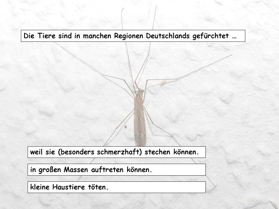 Der Körper eines Insekts besteht aus drei großen Abschnitten: Kopf, Vorderleib, Hinterteil. Kopf, Brust, Hinterleib Kopf, Oberkörper, Unterkörper