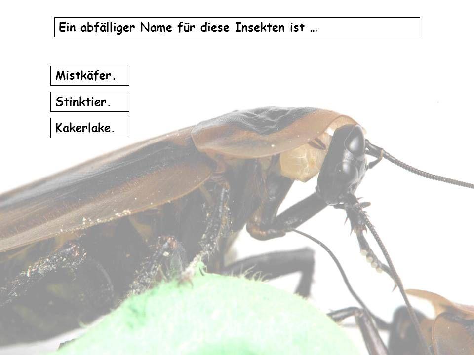 Die Tiere sind in manchen Regionen Deutschlands gefürchtet … weil sie (besonders schmerzhaft) stechen können. in großen Massen auftreten können. klein