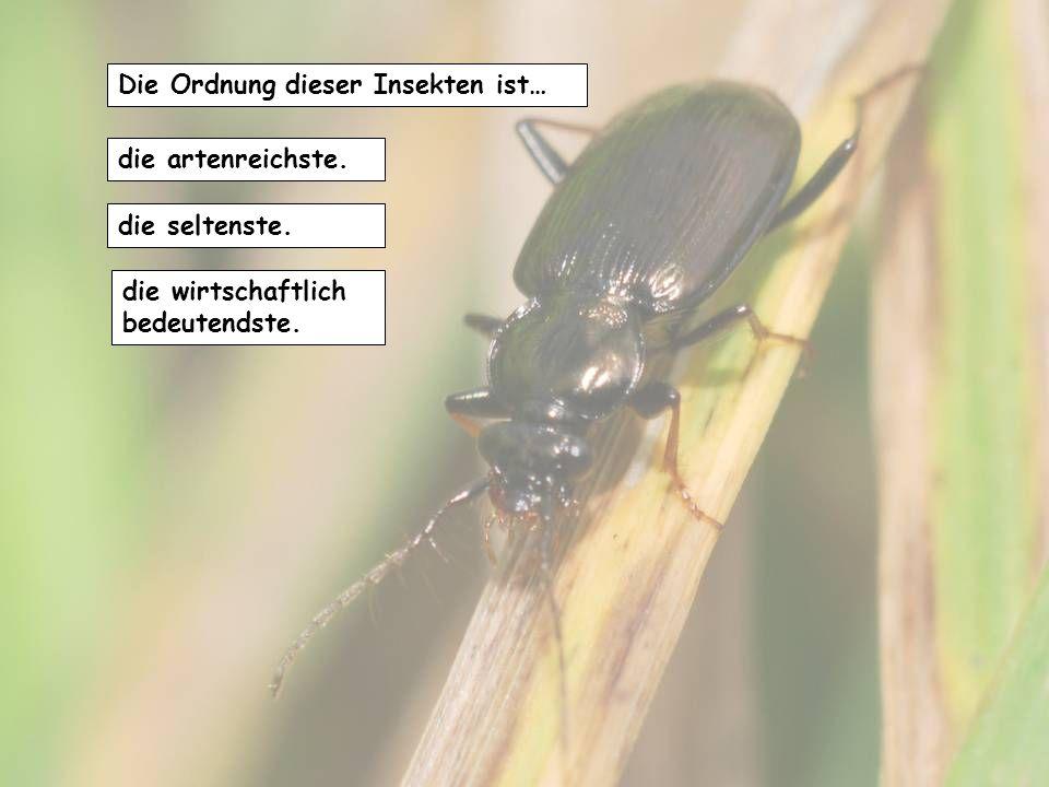 Ein abfälliger Name für diese Insekten ist … Mistkäfer. Stinktier. Kakerlake.