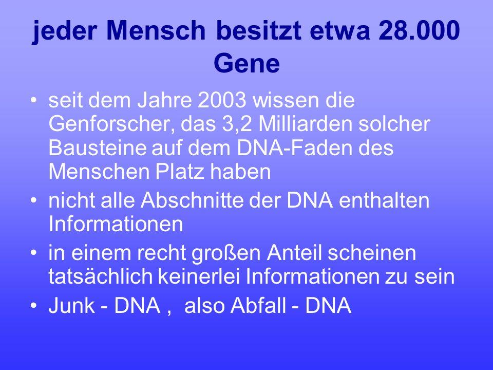 jeder Mensch besitzt etwa 28.000 Gene seit dem Jahre 2003 wissen die Genforscher, das 3,2 Milliarden solcher Bausteine auf dem DNA-Faden des Menschen