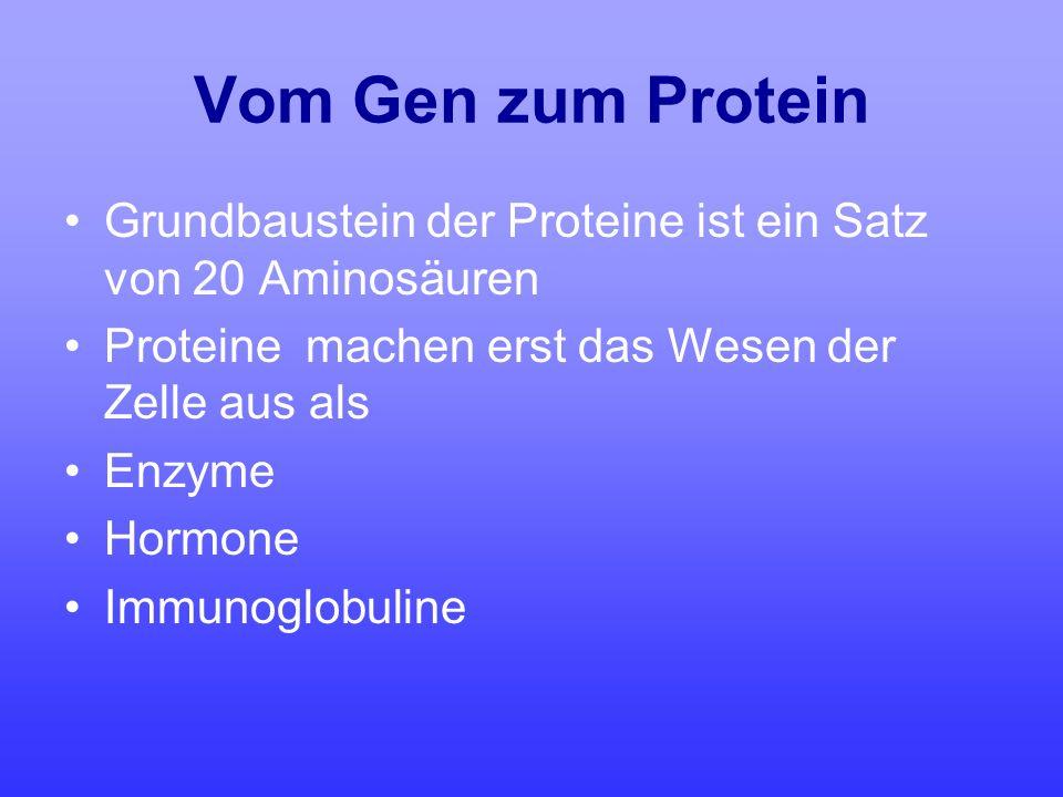 Vom Gen zum Protein Grundbaustein der Proteine ist ein Satz von 20 Aminosäuren Proteine machen erst das Wesen der Zelle aus als Enzyme Hormone Immunog