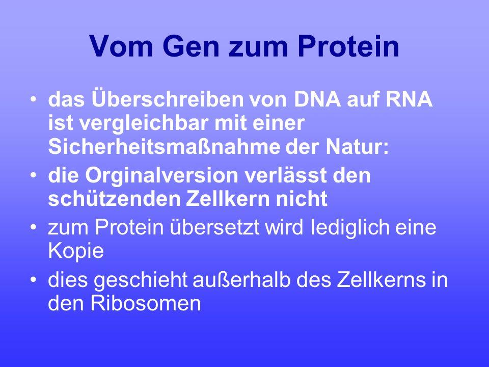 Vom Gen zum Protein das Überschreiben von DNA auf RNA ist vergleichbar mit einer Sicherheitsmaßnahme der Natur: die Orginalversion verlässt den schütz